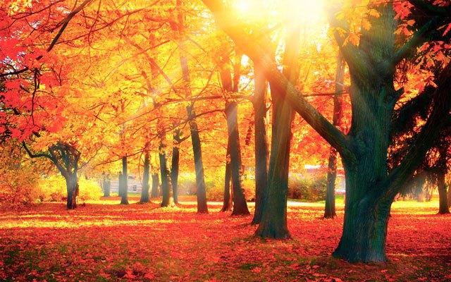 Javorjev gozd